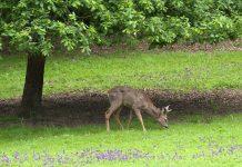 Parque Biológico de Gaia gratuito 2 vezes por semana